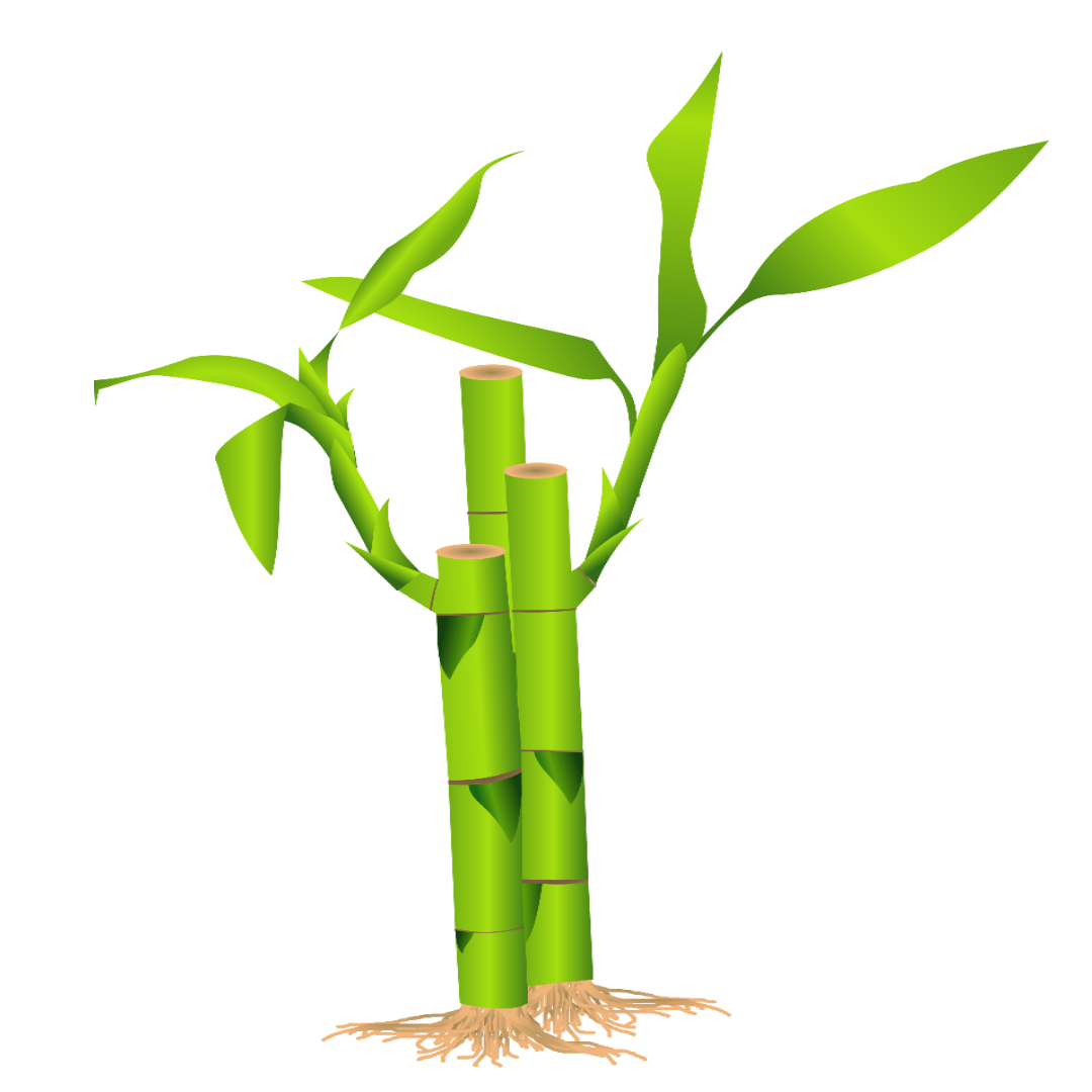 Bamboo can grow more than 3 feet per day