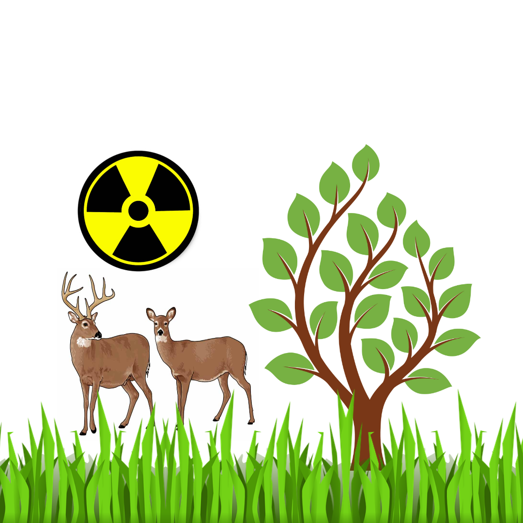 Life is flourishing in radioactive Chernobyl