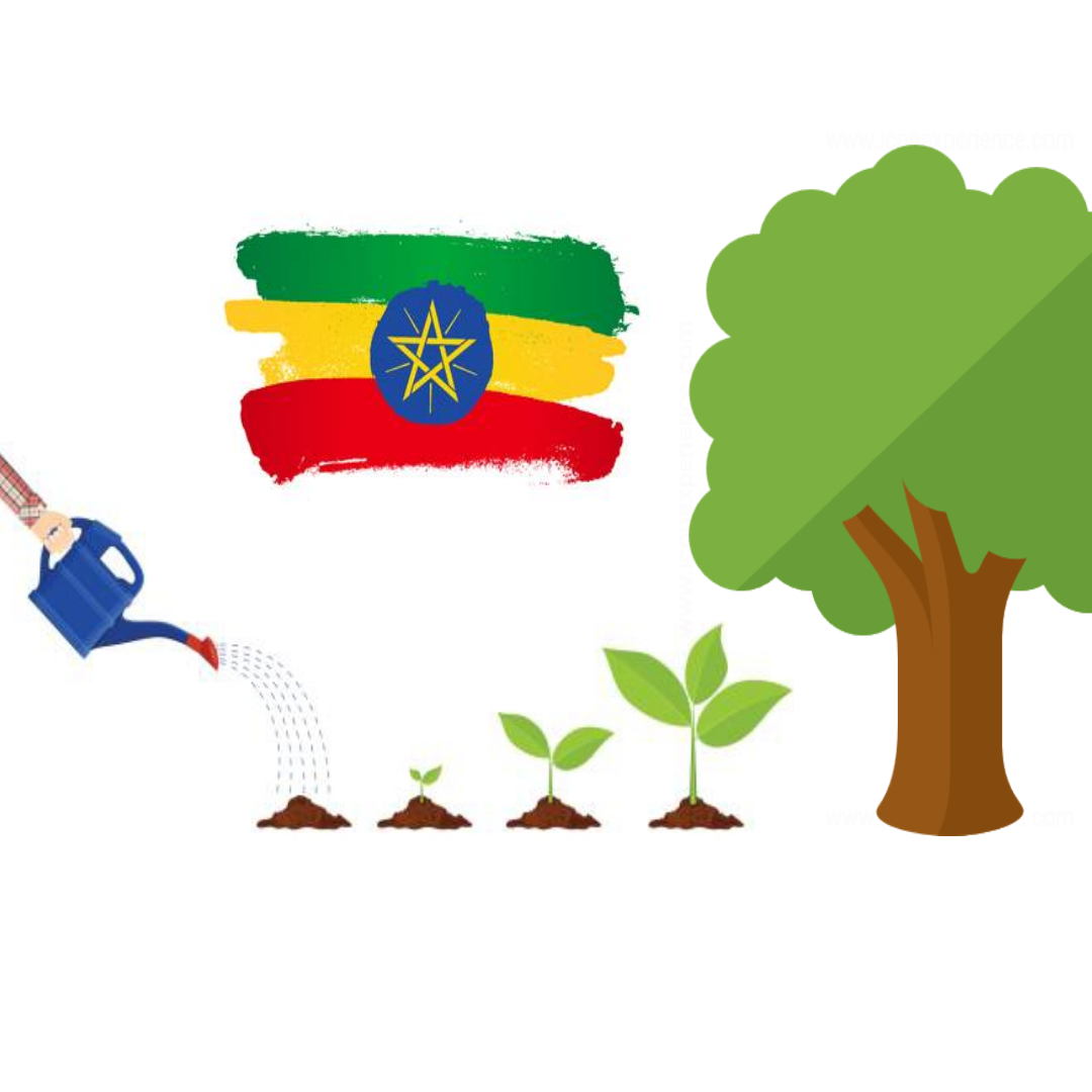 Ethiopia plants 350 million trees in just one day