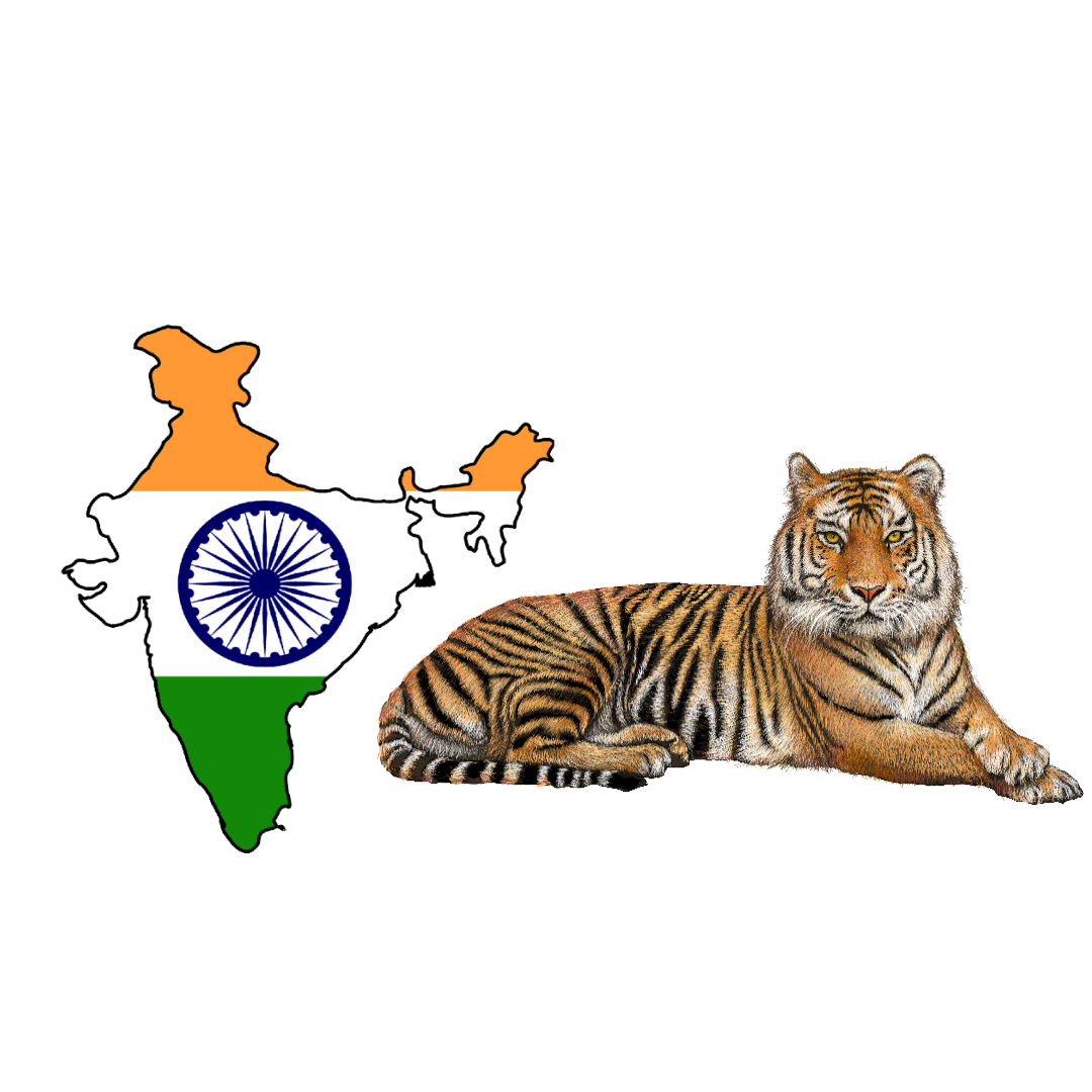 The number of tigers in India is growing