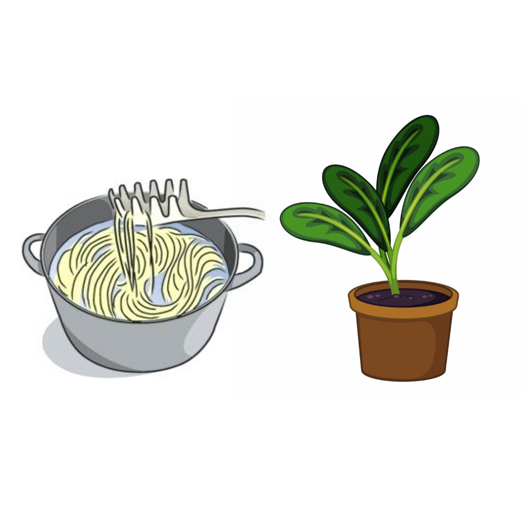 Pasta water is good for your plants