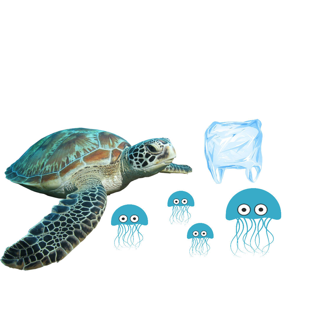 Turtles mistake plastic bags for jellyfish