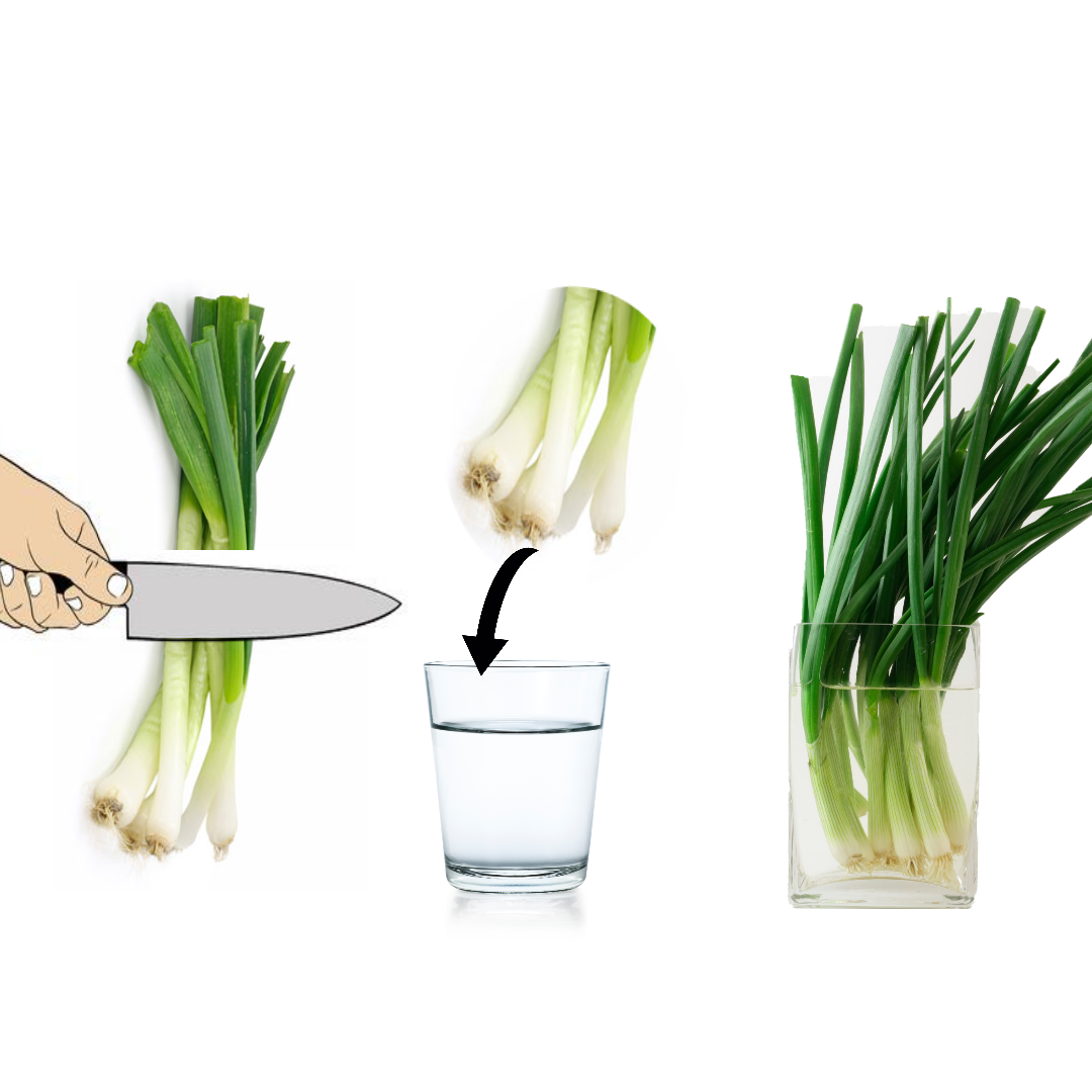 Regrow spring onions indefinitely