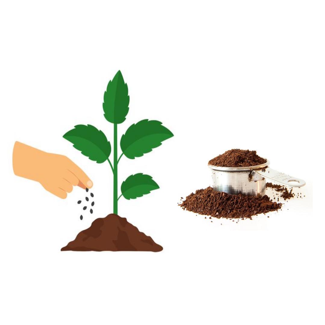 Los granos de café son una gran fertilizante para tus plantas